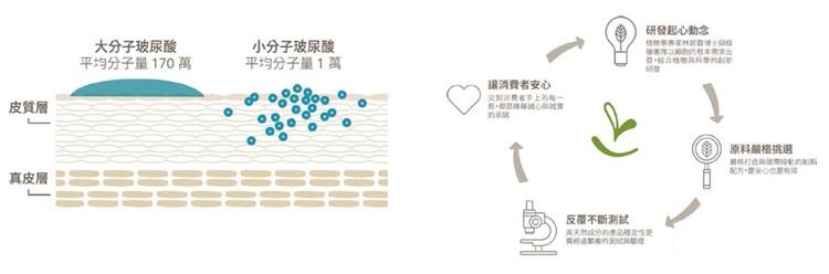 (左圖)高濃度大、小分子玻尿酸分別鎖水、抓水,涵養肌膚保水度。 (右圖)綠藤生機產品研發的核心循環。