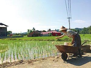 農夫平均耕作年齡62歲