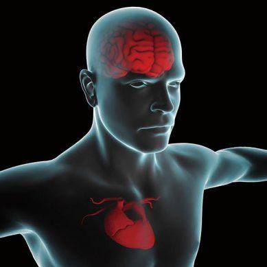 心臟才是大腦主宰