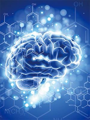 大腦中的神經傳導物質會影響情緒