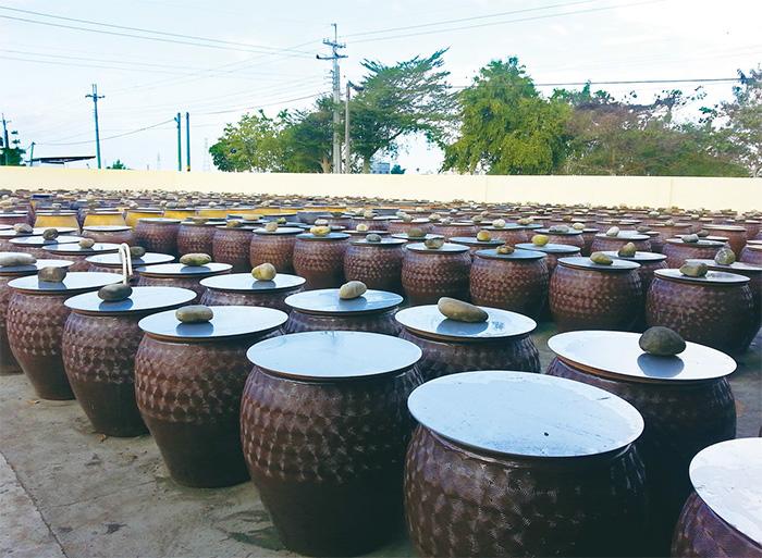 浸漬在一缸缸裡的黃豆,需經過180天的等待,才能發酵成為醬油。(圖片提供/黑豆桑)