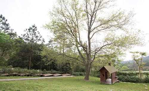 森林鳥花園入口處旁的大草地