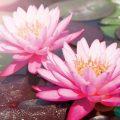 為什麼修印心佛法可以不看佛經