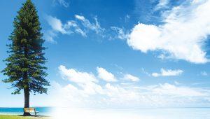 悟覺妙天禪師開示「想」是意識 「參」是智慧