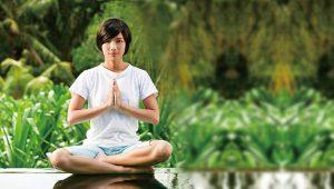 禪不是佛教的專利是全體眾生的權利