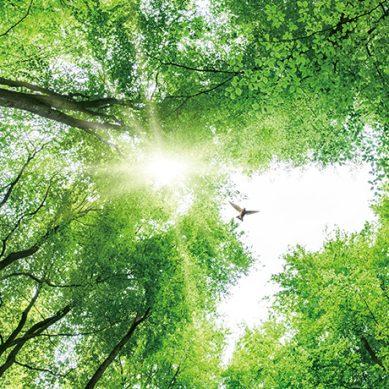 永續森林/友善循環/善用林木/大地健康 國產材自用10大理由