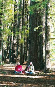 紐西蘭神木區